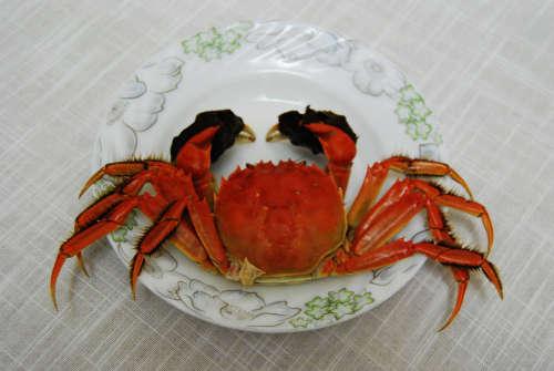 请给我上只洪泽湖大闸蟹 - 于清教 - 产业智慧。商业思维。