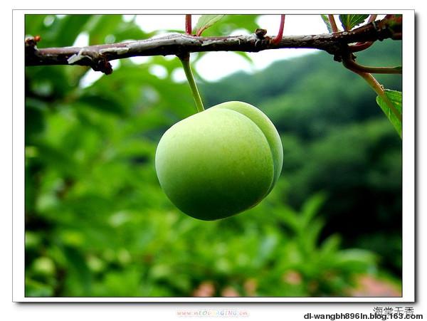我想做我的青苹果(原创) - 荒村孤笠 - 荒村孤笠的博客