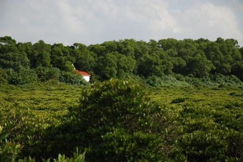 红树林 - 北大荒之树 - 北大荒人