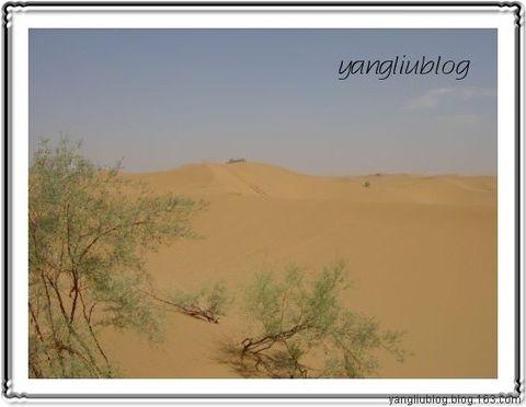 西部漫游之宁夏(沙坡头、腾格里沙漠、沙湖) - 杨柳 - 杨柳的博客