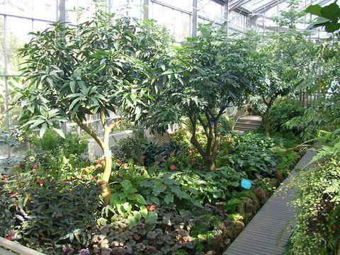 游武汉植物园(一) - 烟雨蒙蒙 - 烟雨蒙蒙的博客