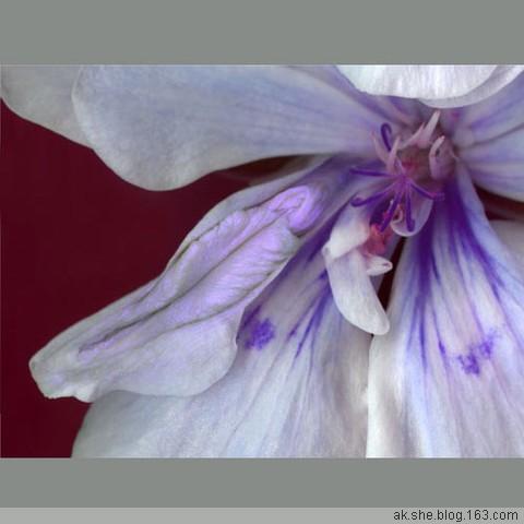 大自然的杰作-----屄花 - 性之爱 - 性之爱