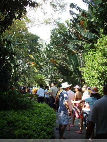 兴隆热带植物园——美丽天涯浪漫行(五) - 海河之韵 - 海河之韵          主页