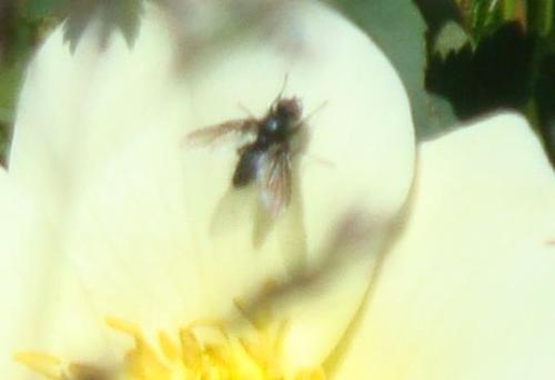 瓢虫采花记 - 贺卫方 - 贺卫方的博客