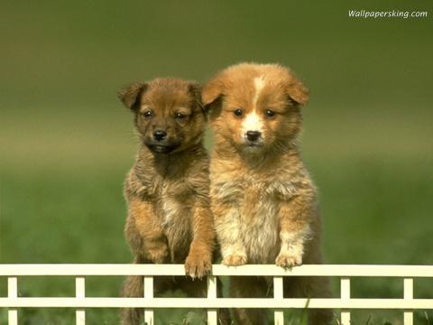 (原)随笔-小狗的眼神 - 绿野仙踪 - 绿野仙踪的博客