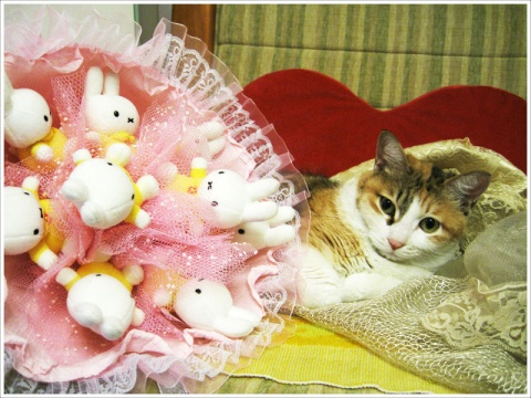 Valentines Day - YцКIκО~ -        悠樂園