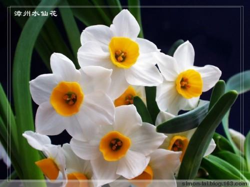 """""""偷来""""的花 - greenpillow - 清清荷香"""