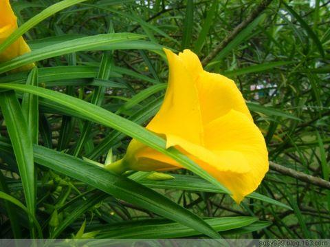 【心搏原创】《百花吟系列》七律(平水韵)百花园之(31——40) - 心博 - 心 博 园