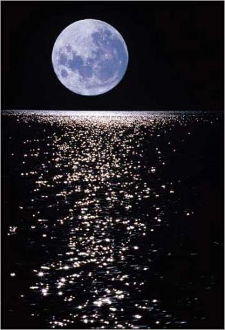 月色阑珊【疏勒河的红柳】 - 疏勒河的红柳 - 疏勒河的红柳