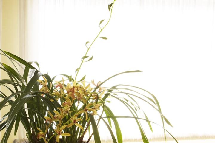 (原创摄影)优雅之兰(三) - 刘炜大老虎 - liuwei77997的博客