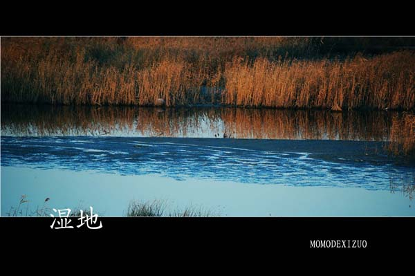 [原创图文]夕阳下的湿地(一) - MOMO - MOMO 的博客