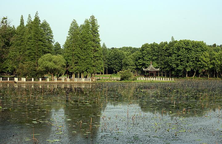 [原创]湖边搜索 - 歪树 - 歪树