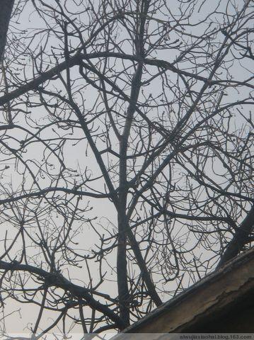2008年12月30日 - 墨灰 - 长耳朵驴