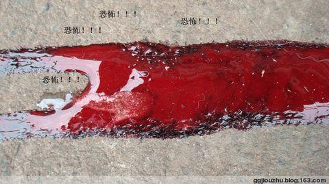 上1000只伴侣动物被惨杀 - 广元市流浪动物救助站 - 四川启明小动物保护中心广元救助站的博客