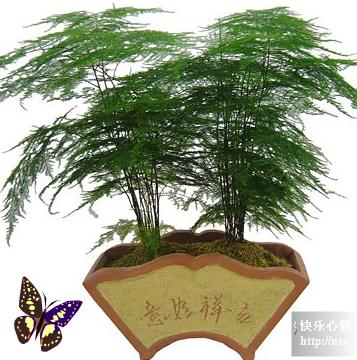 18种常见室内植物的功效  - 爱我就不要伤害我 - wfgm010774的博客