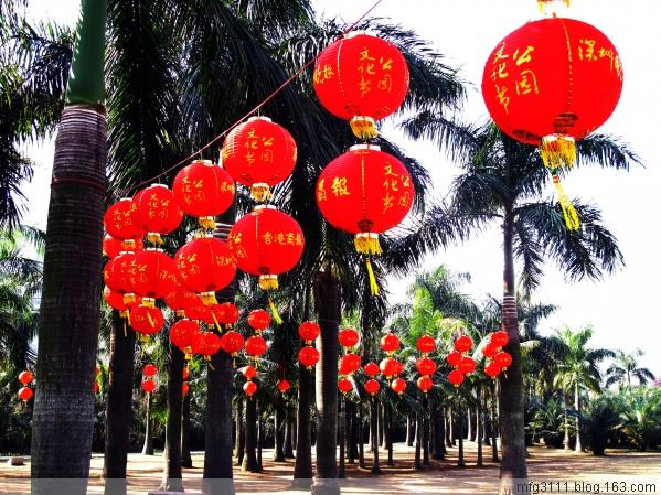 【原创】迎 新 年,大 红 灯 笼 高 高 挂 - 屲林坡 - 屲林坡的博客