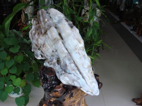 一夜暴富 - 缅甸树化王-山喜 - 缅甸树化王的博客