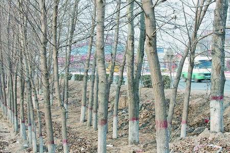 河南树种生态调查 失衡的树种