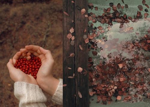 一组美丽的心情图片  - 幽幽 - 青藤满屋