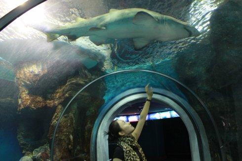 马德里海底世界 - 刘芊含 - 刘芊含的博客