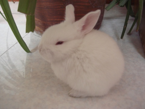 女儿的小白兔 - 平凡的世界 - 平凡的世界