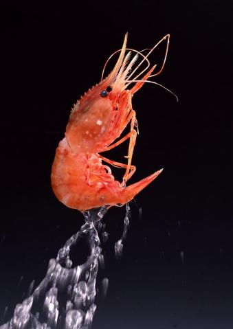 二十一种虾的做法 - xuy56083813465254 - 风扶雾里花  雪攀岭上月