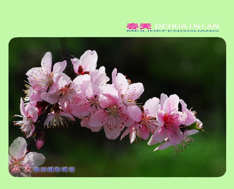 (原摄)春天的怀念 之二 - 高山长风 - 亚夫旅游摄影博客