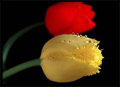 引用 女人味. 让你拥有永恒的美丽【原】 - 湘儿 - 湘儿花园