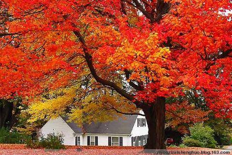 人到中年-就是人生的秋天 - 理想 - 理想的博客