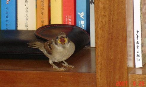 笨鸟 - 汤素兰 - 汤素兰的博客