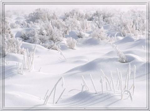 雪之梦 - 荫子 - 倾听夜色