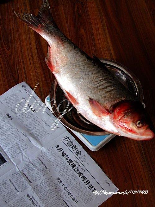 吃鱼防晒--香煎鲢鱼(9道鱼提前做足夏天防晒的功课 - 可可西里 - 可可西里