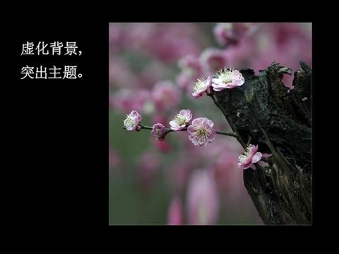 (转载):孙孝明老师《微距拍摄》课程内容 - yuanxz - 网易博客 - nzwdong - nzwdong 的博客