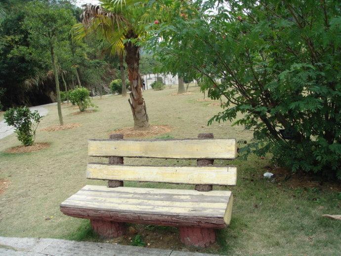 福州森林公园中的椅子 - 老猫侠 - 老猫侠的博客