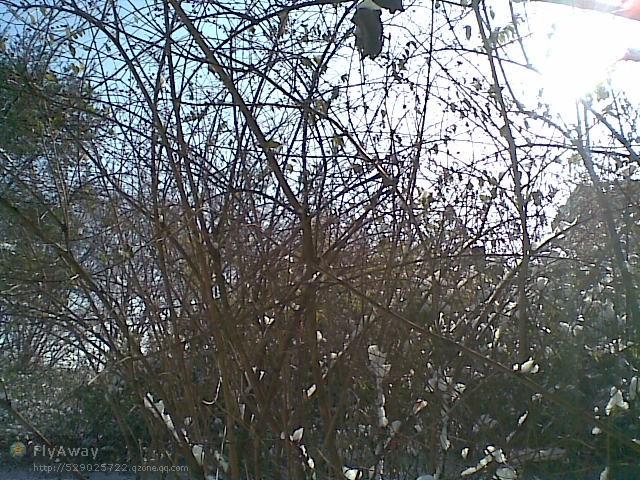 ...之间的小树林   本人认为的燕大最美的地方之一……那个学缘...