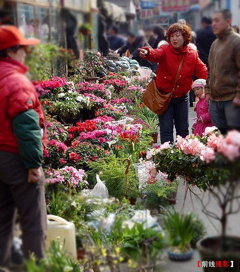 让鲜花装扮我们的生活 - ming - 星晨乐园
