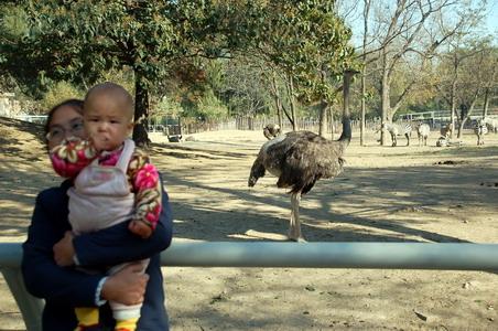 北京动物园见闻---11月7日