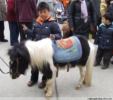 """大庙会上的""""小马"""" - 西地笺儿 - 健康和摄影-西地笺儿的博客"""