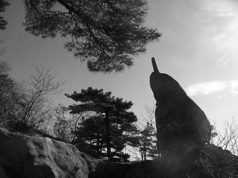冬日黄山 水墨画卷 - 清扬 - 花果飘香