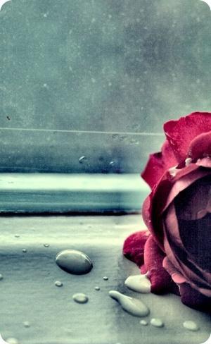 【现代诗】玫瑰,走了 - 骄阳 - 诗人骄阳