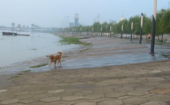 江滩水位已过警戒线 - 清清百合 - qqbh温馨小屋