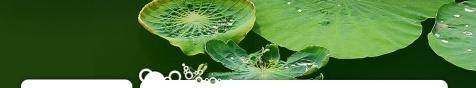 圣诞在中国^_^(原) - 青青茉莉花 - 保护自然.崇尚真理.热爱生活