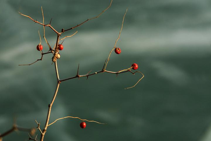 """(原创摄影)冬季的""""无题""""照片 - 刘炜大老虎 - liuwei77997的博客"""