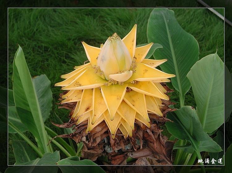 植物精美图谱600种(七) - 香儿 - 香儿