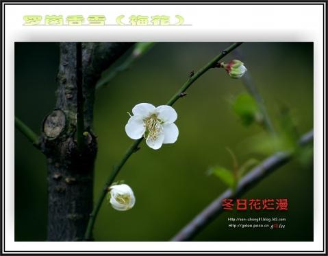 引用 困境【摄影的四种境界之二】 - 青青茉莉花 - 保护自然.崇尚真理.热爱生活