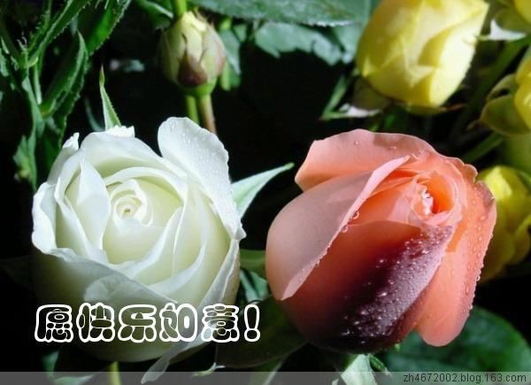 回帖专用31 - 【夢幻驛站】 - 室雅人和 知足常乐