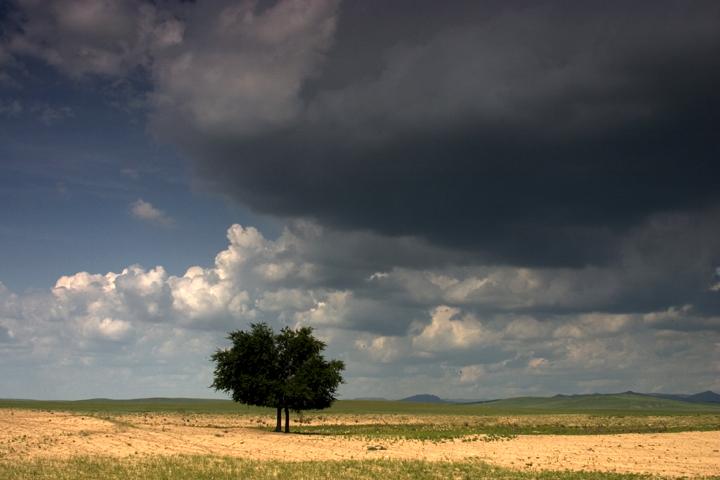 (原创摄影)草原的树 - 刘炜大老虎 - liuwei77997的博客