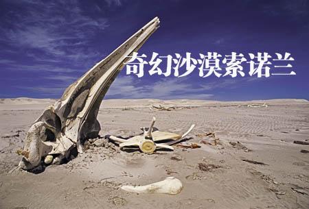 奇幻沙漠索诺兰(一) - 华夏地理 - 华夏地理的博客