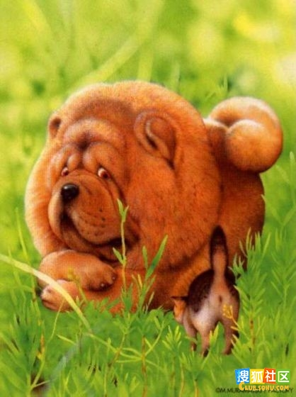 手绘动物画(动物手绘画大师----村松诚作品集)