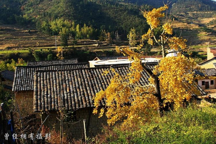 (原创摄影) 粤北银杏         - 曾经拥有 - 我的摄影花园